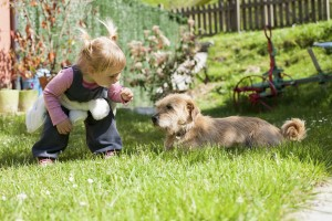 blonde baby two years old age approaching crouching to a brown terrier breed dog lying on green grass lawn and looking at girl