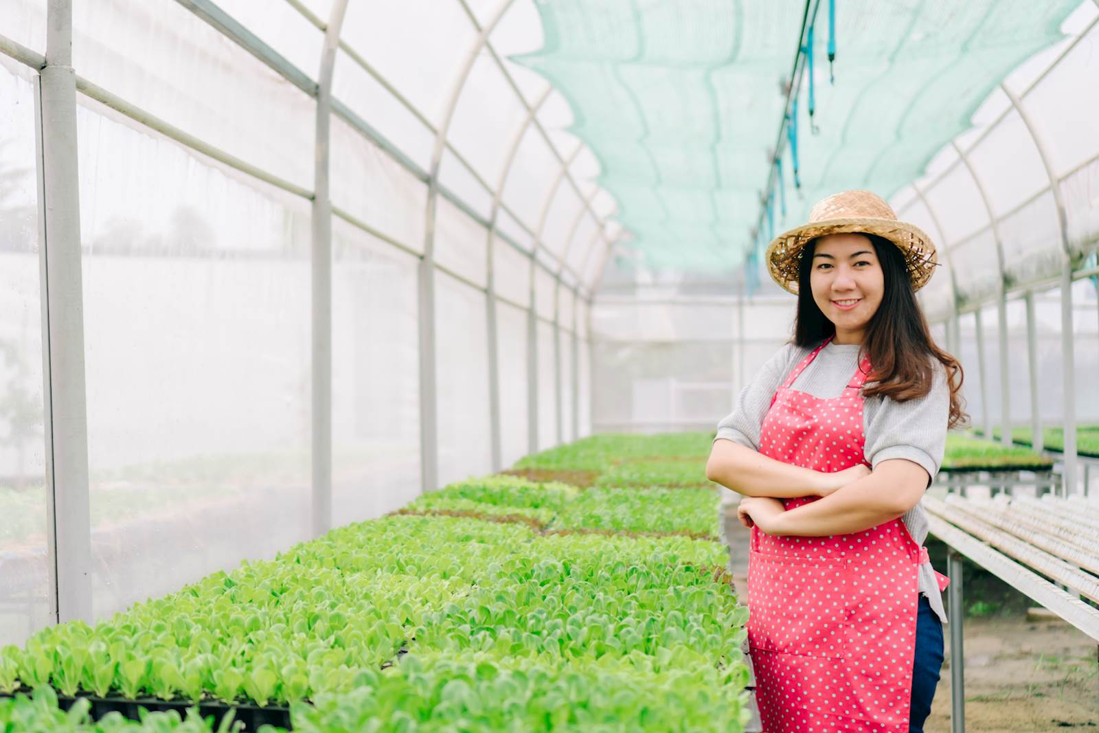 Woman standing in greenhouse with plants